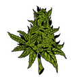 cannabis drawing design vector image