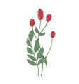 gorgeous flowers and leaves of sanguisorba vector image vector image