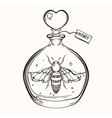 Hand drawn engraving Sketch of Bee in the bottle vector image vector image