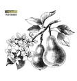 hand drawn pear branch vector image vector image