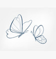 Butterfly insect art line isolated doodle