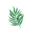 leaf of tropical palm exotic plant vector image vector image