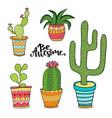 succulent and cactus set cartoon plants in pots vector image
