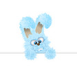 blue easter bunny is peeping out fluffy rabbit vector image