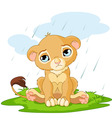 cartoon lion cub vector image vector image