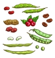 Nuts kernels and berries icons vector image