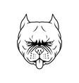 pit bull head dog head vector image