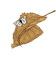 autumn brown leaves and butterfly vector image vector image