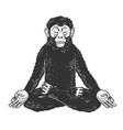 chimpanzee monkey meditating sketch vector image