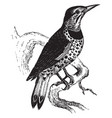 golden winged woodpecker vintage vector image vector image