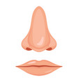 human nose and mouth vector image vector image