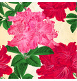 seamless texture flowers rhododendrons vector image vector image