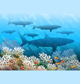 swimming shark shoal vector image