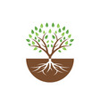 tree graphic design template isolated vector image vector image