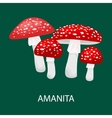 Amanita muscaria a poisonous mushroom in forest vector image