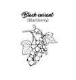 black currant freehand ink pen vector image vector image