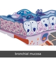 Bronchial Mucosa Scheme vector image vector image