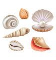 open seashells luxury pearls and marine objects vector image