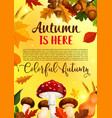 autumn leaf fall in forest greeting poster vector image vector image