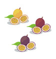 passion fruit2 vector image vector image