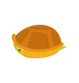scared green turtle hiding in its shell cartoon vector image