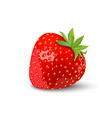 seamless pattern with strawberry tropical vector image vector image