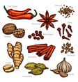 Sketch Herbs And Spice Color Set vector image vector image