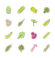 vegetables icons - lettuce spinach pea and beans vector image