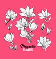 magnolia flowers freehand set vector image