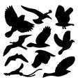 bird silhouette vector image vector image