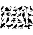 birds silhouettes collection vector image