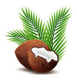 coconut icon broken coconut and leaf isolated vector image vector image