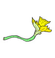 comic cartoon daffodil flower vector image vector image