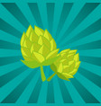 green humulus hop isolated ray vector image