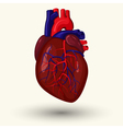 human heart cartoon vector image vector image