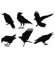 set ravens a collection black crows vector image vector image