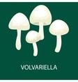 Volvariella volvacea Straw Mushroom Wild Foraged vector image vector image