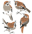 sparrow or thrush vector image