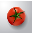 tomato with rootlet top side vector image