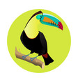 big bright toucan tropical bird vector image