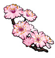 blossoming branch of a tree pink flowers in spring vector image