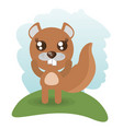 cute beaver animal wildlife vector image