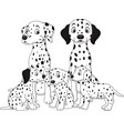 family of dalmatian dogs vector image