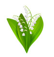 lilly of the valley isolated on white vector image vector image