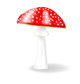 fly agaric vector image vector image