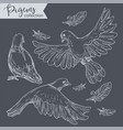 flying pigeons set doves with plumage vector image vector image