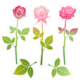 bright spring roses flowers silhouette vector image