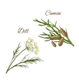 Dill cumin spice herbs isolated icons vector image