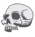 skull 3 vector image vector image