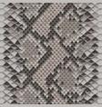 snake skin colorful animal beige seamless pattern vector image vector image